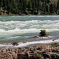 Kootenai Falls Montana by Carol Groenen