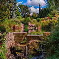 Kubota Garden Pond by Jonah Anderson