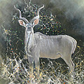 Kudu Bull by Roy Keeler