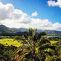 Kuhio Hwy Outlook by Douglas Barnard
