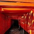 Kyoto Fushimi Shrine-5 by Sergey Reznichenko