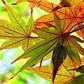 Kyoto's Beauty Of Autumn by Karen Jensen
