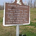 La-020 Fashion Plantation by Jason O Watson