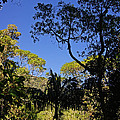 jungle in La Amistad National Park Panama 1 by Rudi Prott