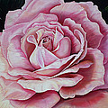 La Bella Rosa by Karin  Dawn Kelshall- Best