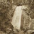 La Coca Falls El Yunque National Rainforest Puerto Rico Print Vintage by Shawn O'Brien