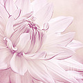 La Dahlia by Angela Doelling AD DESIGN Photo and PhotoArt