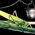 La Locusta E Il Secchio by Danka Weitzen