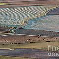 La Mancha Landscape - Spain Series-ocho by Heiko Koehrer-Wagner