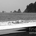 La Push Beach Black And White by Carol Groenen