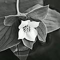 La Vie En Noir Et Blanc by Aimelle