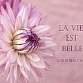 La Vie Est Belle by Kim Hojnacki
