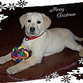 Lab Pup Merry Christmas by Joyce Dickens