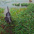 Labrador by Kenneth Cobb