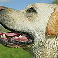 Labrador Retriever Dog by Jean-Michel Labat