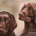 Labrador Retrievers by Gail Dolphin