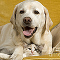 Labrador With Cat by Jean-Michel Labat