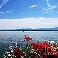 Lac Leman - Switzerland by Cristina Stefan
