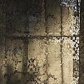Lace Curtain 1 by Jocelyn Friis
