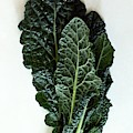 Lacinato Kale by Romulo Yanes