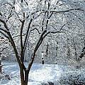 Lacy Snowfall by Susan Wyman