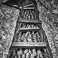 Ladder To The Treehouse by Scott Norris