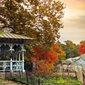 Ladies Pavilion In Autumn by Jessica Jenney