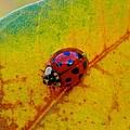 Lady Bug 3 by Joe Wyman