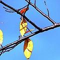 Lady Bug And Leaves by Karen Majkrzak