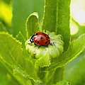 Lady Bug In The Garden by Amy McDaniel