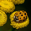 Lady Bug by Paul Freidlund