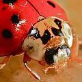 Lady Bug by Rich Tanguay