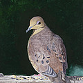Lady Dove by Mike Robles