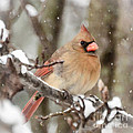 Lady In The Snow by Kerri Farley
