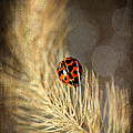 Ladybird by Darren Fisher