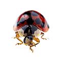 Ladybird Macro by Jane Rix