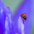 Ladybug Adventure 8x10 by Priya Ghose