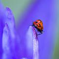 Ladybug Adventure by Priya Ghose