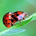 Ladybug And Gentlemanbug by Geoff Crego