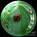 Ladybug Eating Aphids by Renee Trenholm