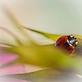 Ladybug II by Marco Oliveira