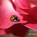 Ladybug by Jacklyn Duryea Fraizer