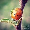 Ladybug  by Kerri Farley