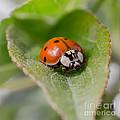 Ladybug by Lucid Mood