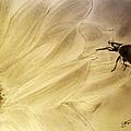 Ladybug On A Sunflower by Jose A Gonzalez Jr