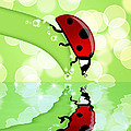 Ladybug On Leaf Looking At Water Reflection by David Gn