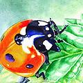 Ladybug On The Leaf by Irina Sztukowski