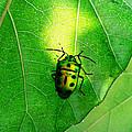 Ladybug by Ramabhadran Thirupattur