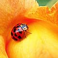 Ladybug by Rona Black
