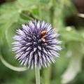Ladybugs  by Christiane Schulze Art And Photography